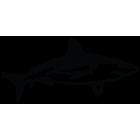 Наклейка «Акула v2»