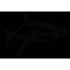 Наклейка «Акула v3»