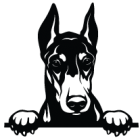 Наклейка «Доберман v7»