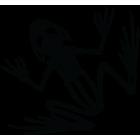 Наклейка «Скелет лягушки»